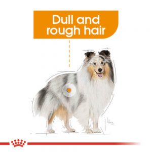 ROYAL CANIN Coat Care Pouch, 85g